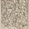Characters and Caricaturas by William Hogarth